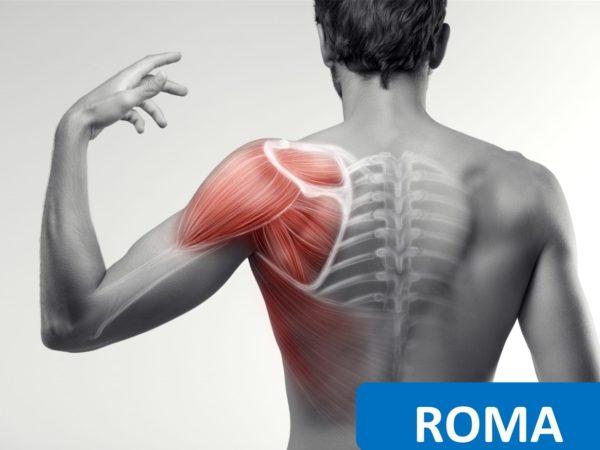 corsi ecm per fisioterapisti la spalla valutazione clinica e trattamento riabilitativo